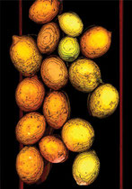 Lemons. 2003. Ink on paper. 42 x 29cm. © Charles Rocco