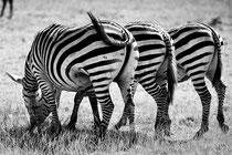 Zebrastreifen, Foto Bert Harzer