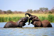 Elefantenbad, Foto Bert Harzer