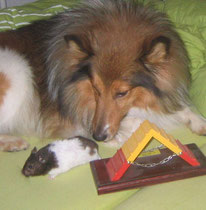 Hamster Agi 2010