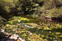 Weiße Federlibelle, Platycnemis latipes, Habitat (2), ein Fluss in den südfranzösischen Cevennen.