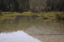 Lebensraum der Sibirischen Azurjungfer, Coenagrion hylas, 2