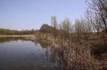 Biotop der Großen Heidelibelle, Sympetrum striolatum (1).