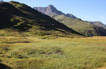 Lebensraum der Alpen-Smaraglibelle, Somatochlora alpestris,  (1)