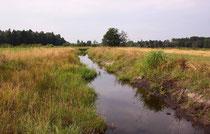 Habitat des Plattbauchs, Libellula depressa (1). Offene neue Gewässer sind prädestiniert für diese Pionierart.