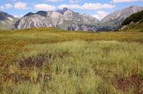Lebensraum der Alpen-Mosaikjungfer, Aeshna caerulea, (1)