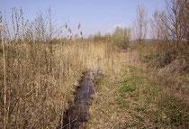 Habitat des Kleinen Blaupfeils, Orthetrum coerulescens (1).