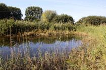 Herbst-Mosaikjungfer, Aeshna mixta, Lebensraum (1).