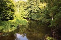 """Der Heidefluss """"Örtze"""" stellt das einzige Habitat der Westlichen Geisterlibelle, Boyeria irene, in Deutschland dar."""