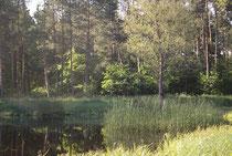 Keilfleck-Mosaikjungfer, Aeshna isoceles, Lebensraum (2).