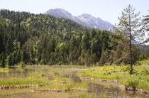 Lebensraum der Sibirischen Azurjungfer, Coenagrion hylas, 1