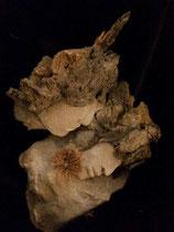 1-18. Terre (Paper clay) & technique mixte. 30x26x16cm
