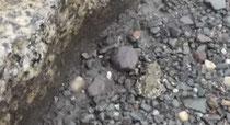 Na, erkennen Sie die kleine Kröte rechts im Bild? (Foto: Gebhrd Edner)