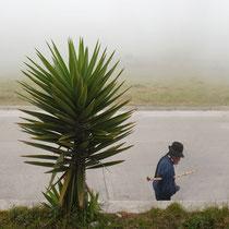 Pres du Cotopaxie Equateur