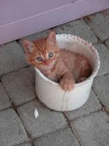 Unser Katzensohn Sili