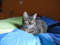 Unsere Katzenmutter Syrah