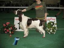 22 мес  Национльная выставка спаниелей-2008  СW,Чемпион Клуба