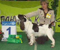 "16 ""Чемпионат Спаниель-Клуба 2008"" CW КЧК  Judge: D. Todd (GB)"