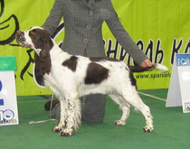 18 month, ЛС, ПК (AKC-2008, Moscow)  Judge: D.Todd (GB)