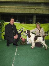 1.5 года   Монопордная выставка спаниелей  Судья D.Todd  CW,BOB,КЧК