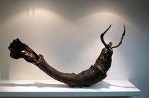 Metamorfósil, 2009, 72x130x20 cm