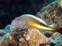 Korallenwächter