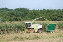 デントコーン収穫作業