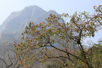 Im Amboró Nationalpark