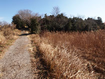 数年前は右側に見える水田にレンゲが咲いていましたが、今では枯れたセイタカアワダチソウが・・・