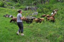 Claudia Janett und die Hauptprotagonistinnen: die Schafe von Ardez