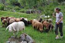 Glückliche Schafe, schöne Produkte: das ist das Geheimnis der butia da besch
