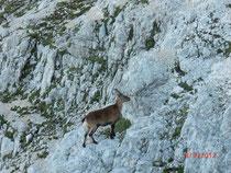 Unser Bergführer, der uns im Abstand von 20m bis auf den Gipfel führt