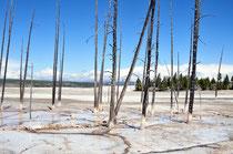 Lower Geyser Basin / Yellowstone National Park, Wyoming