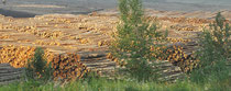 Riesige Holzindustrie