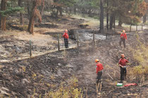 Viele Waldbrände
