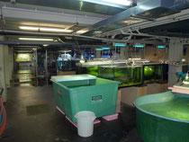 Aquarienhaus des Schönbrunner Tiergartens - Aufzuchtstation im Keller
