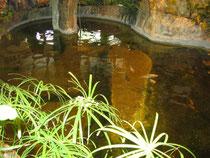 Tropical pond - Riga Zoo