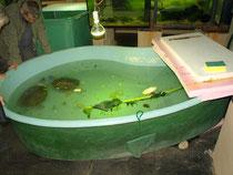 Robert GUGGENBÜHL & Thomas WAMPULA beim Betrachten der Batagur-Schildkröten (Batagur baska)