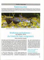 Paepke, Hans Joachim: Ictalurus nebulosus - zu Unrecht fast vergessen (Wels Jahrbuch 1993, S. 35-40)