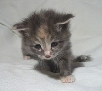 Lilli 3,5 Wochen alt