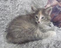 Lilli mit 7 Wochen