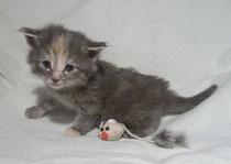 Lilli mit 3,5 Wochen