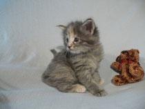 Lilli mit 4,5 Wochen