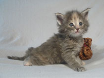 Lilli 4,5 Wochen alt