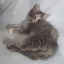 Lilli 7 Wochen alt