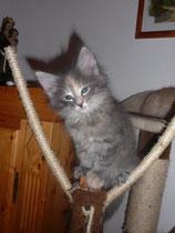 Lilli 8,5 Wochen alt