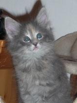 Lilli mit 8,5 Wochen
