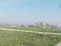 麦の畑、遠くにクシナガラの寺院が見えます。