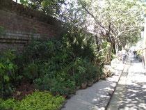 園芸店の道路反対側。植木や観葉植物がたくさん並んでいます。ここは本当は歩道なんですけど。