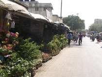 シアルダー駅近くの園芸店の並ぶ通り。道路を挟んだ反対側には少し大きめの植木が並んでいました。